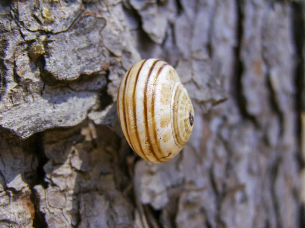 A snail resting on the tree in Puglia