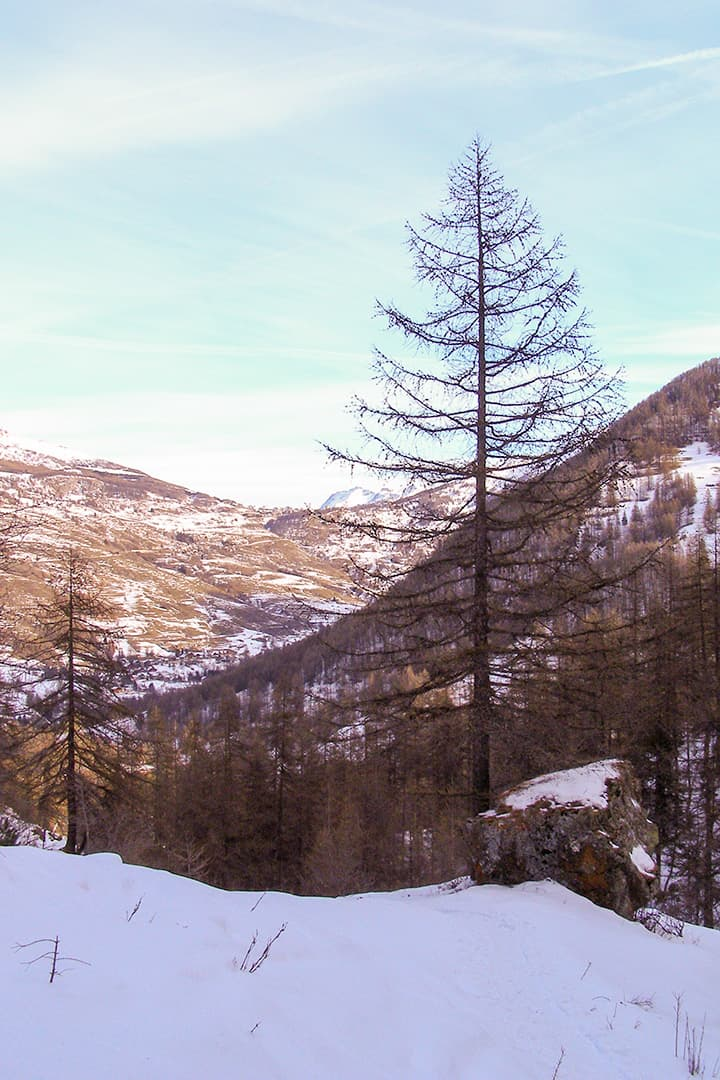 The valley of Cesana with snow-covered mountains and trees
