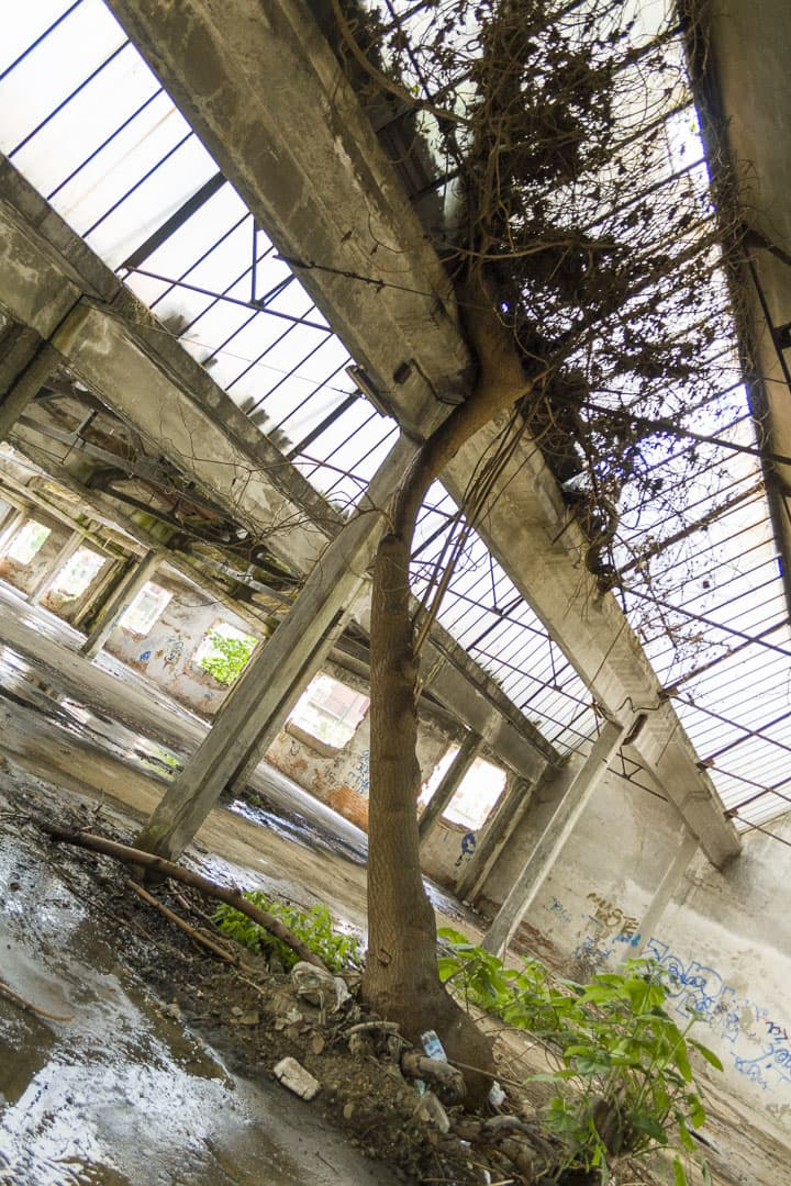 Tree at Garis – Abandoned Brakes Factory – Nichelino, Italy