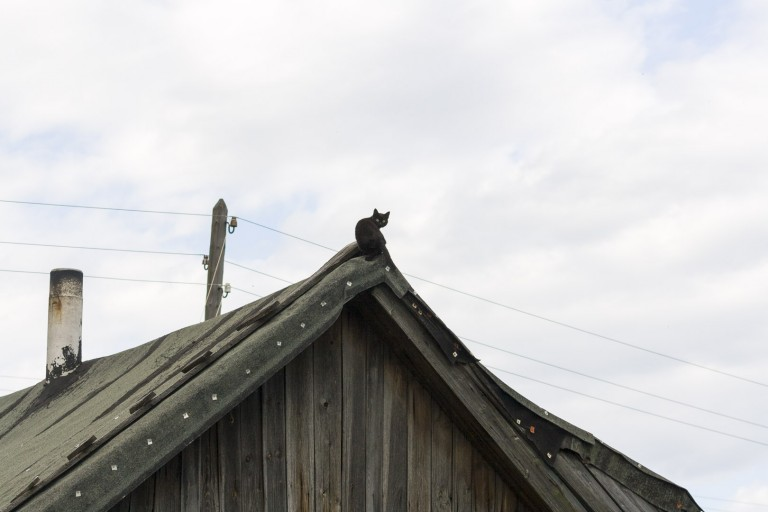 Cat on the Roof in Dzerzhinsk, Nizhegorodskaya Oblast – Russia