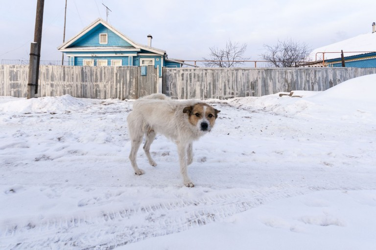 Dog on the Snow in Dzerzhinsk, Nizhegorodskaya Oblast – Russia