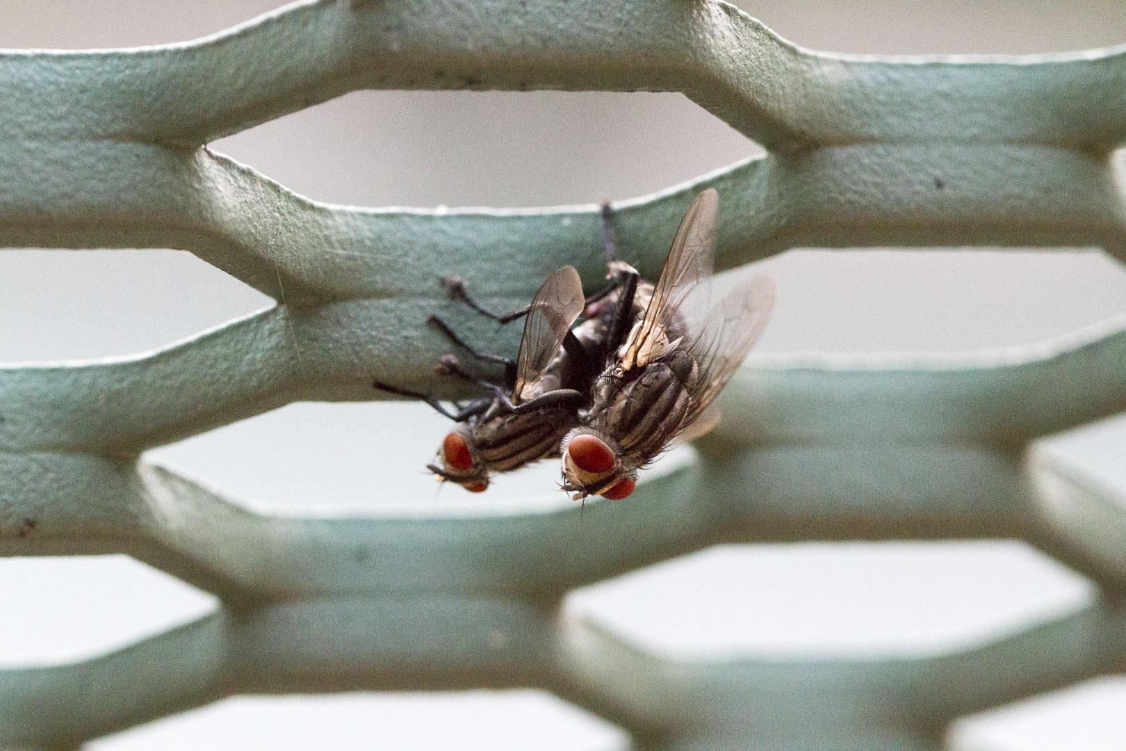 Bugs Macro Photography